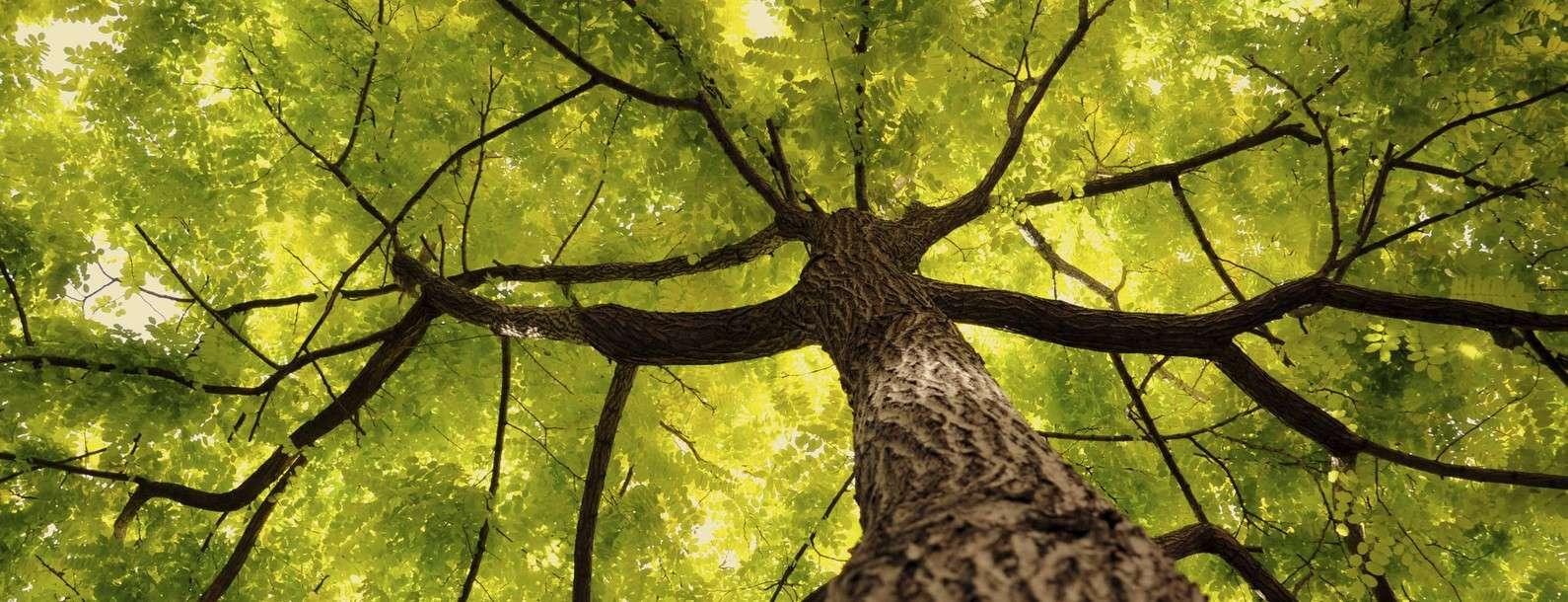 jade-produits-biocontrole