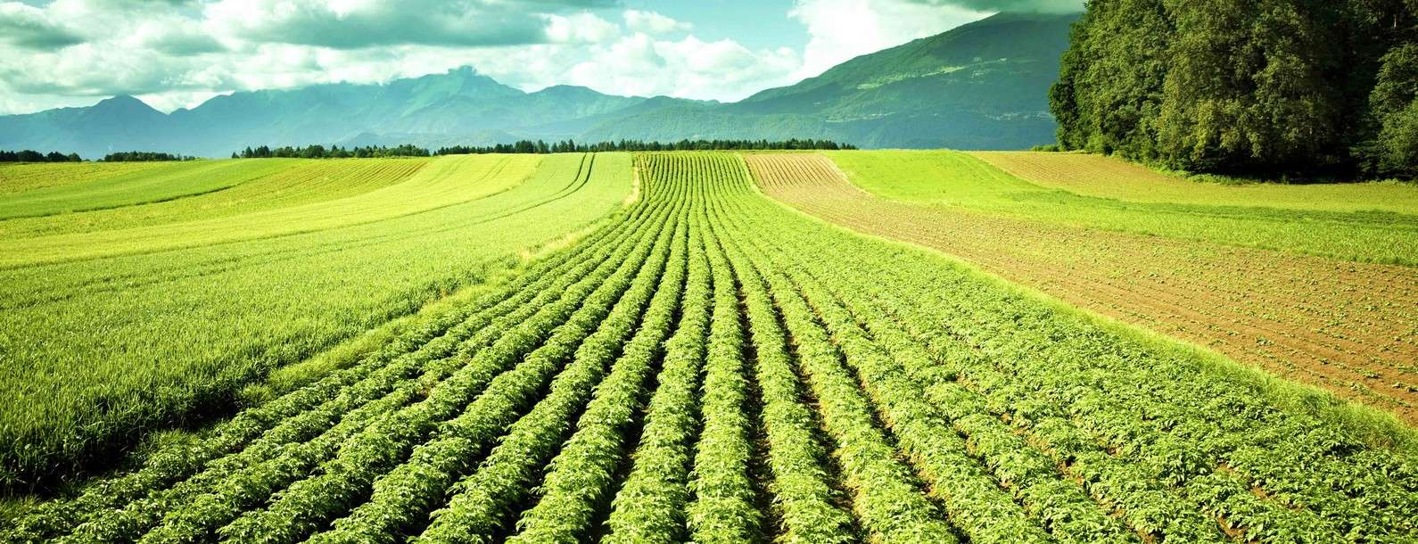 produits-jade-agricole